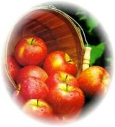 Honeycrisp Apples Gift Basket